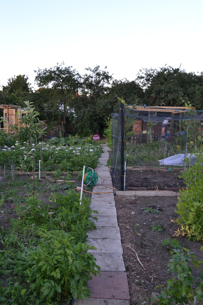 Allotment 9